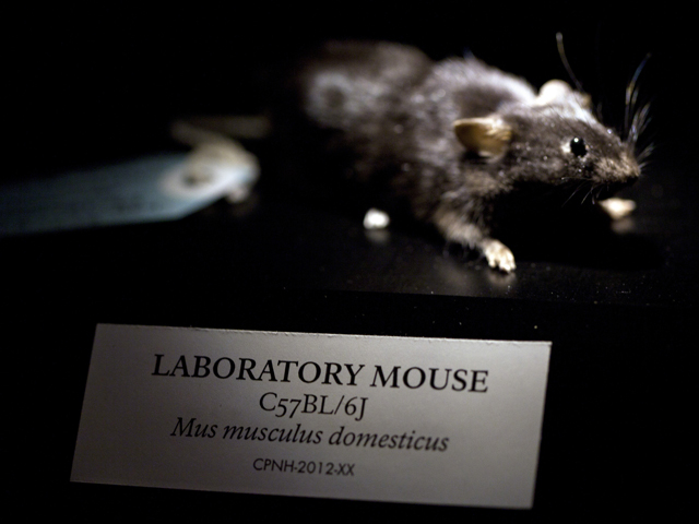 PostNatural Mouse